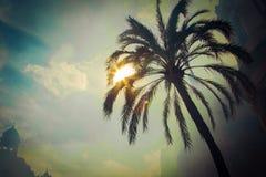 Sun brille des feuilles de palmier de throgh Photo libre de droits