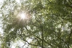 Sun brille par des arbres Photos stock
