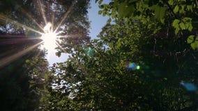 Sun brille par des feuilles d'arbre banque de vidéos