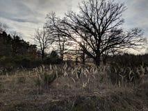 Sun brille par l'herbe photos libres de droits