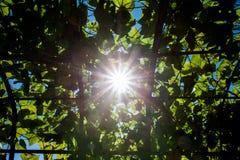 Sun brille par les feuilles Images libres de droits