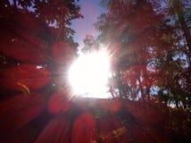 Sun brille sur des bois image stock