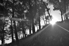 Sun burst through the forest. stock photos