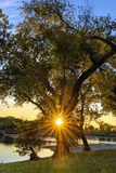 Sun Burst From Tree. Sun Burst, Tree, River, Sunset, Landscape, Nature Royalty Free Stock Photos