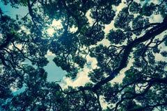 Sun bursts  from sky above through pohutukawa tree Stock Photo