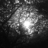 Sun through a canopy of trees Royalty Free Stock Image
