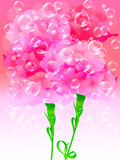 Sun Carnation. Illustration of Mother's Day Carnation and no background Stock Photo