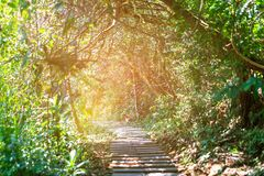 Sun casting shadows on a paved walkway lined. With trees.selective focus Royalty Free Stock Photography