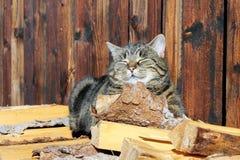 In the sun. A cat enjoys the sun Royalty Free Stock Photos