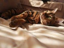 Sun in the cat& x27;s eyes stock photo