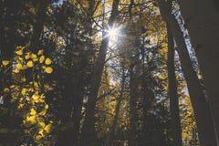 Sun cependant les arbres Photographie stock libre de droits