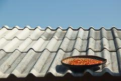 Sun che asciuga i peperoncini rossi su un tetto Fotografia Stock Libera da Diritti