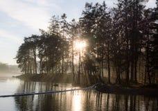 Sun che attraversa gli alberi fotografia stock libera da diritti