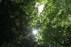 Sun che attraversa gli alberi Fotografia Stock