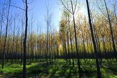 Foresta soleggiata Fotografie Stock
