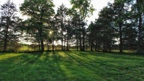 Sun che cade dietro il Treeline immagini stock libere da diritti