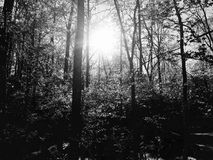 Sun che lucida attraverso gli alberi fotografia stock