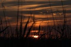 Sun che mette dietro le canne 2 Immagine Stock