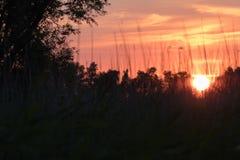 Sun che mette dietro le canne 3 Immagini Stock Libere da Diritti