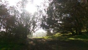 Sun che si dissipa nebbia fotografia stock libera da diritti