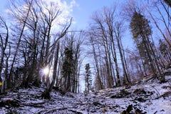 Sun che splende attraverso gli alberi nell'orario invernale Immagini Stock