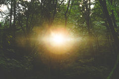 Sun che splende attraverso la foresta scura fotografia stock