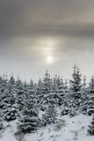 Sun che splende attraverso la nuvola sottile sugli alberi nevosi Immagini Stock Libere da Diritti