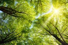 Sun che splende attraverso le cime d'albero Fotografia Stock Libera da Diritti