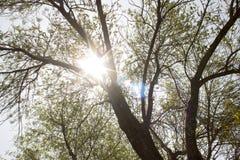 Sun che splende attraverso un albero fotografia stock