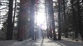 Sun che splende da parte a parte Fotografia Stock
