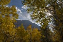 Sun che splende dai rami in autunno Fotografia Stock