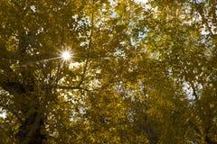 Sun che splende dai rami in autunno Immagine Stock