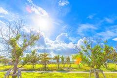 Sun che splende nell'isola tropicale Fotografia Stock Libera da Diritti