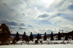 Sun che splende sopra le linee e la neve di albero Fotografia Stock Libera da Diritti