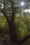 Sun che splende su Forest Coming Back To Life bruciato fotografie stock libere da diritti