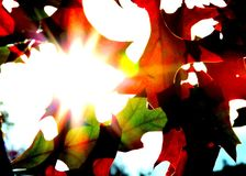 Sun che splende tramite le foglie di caduta Fotografia Stock Libera da Diritti