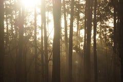 Sun che viene attraverso Immagine Stock