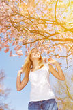 Sun and cherry blossom in spring Royalty Free Stock Photography