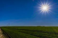 Sun, cielo azul y campo verde foto de archivo