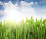 Sun, cielo ed erba con le gocce Immagini Stock