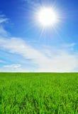 Sun, cielo y campo verde Imagen de archivo libre de regalías