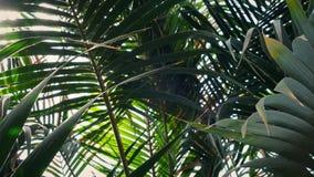 Sun clignote par la forêt tropicale tropicale luxuriante clips vidéos