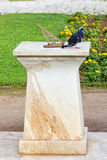 Sun clock and the pigeon Royalty Free Stock Photos