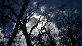 Sun and clouds behind trees. Sun behind clouds behind treebranches Royalty Free Stock Photography