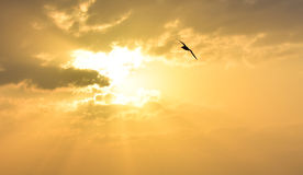 Sun between clouds and a bird flying. Stock Photography