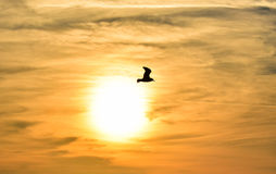 Sun between clouds and a seagull flying. Royalty Free Stock Photography