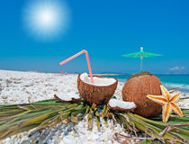 Sun and coconuts. Bright sun over coconuts at the beach Royalty Free Stock Photo