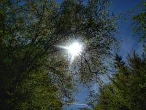 Sun a collé dans une couronne d'arbre comme ampoule dans une lampe images stock