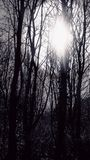 Sun coming through forest. Sunlight shining through forest in black and white stock images