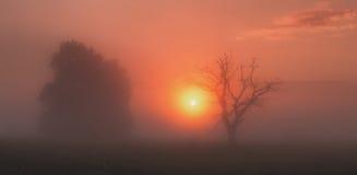 Sun coming throw fog Stock Photography